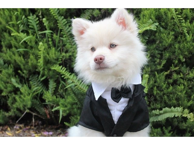 A dog in a suit to illustrate one of the unique wedding ceremony ideas